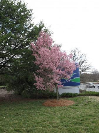 Charlotte, NC: Spring is here!