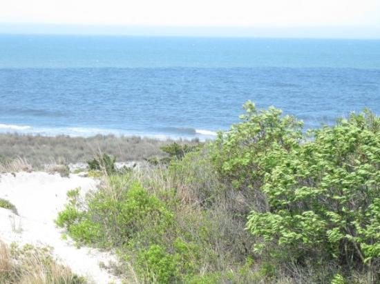 Cape Henlopen State Park: Overlooking the ocean from the Great Dune overlook