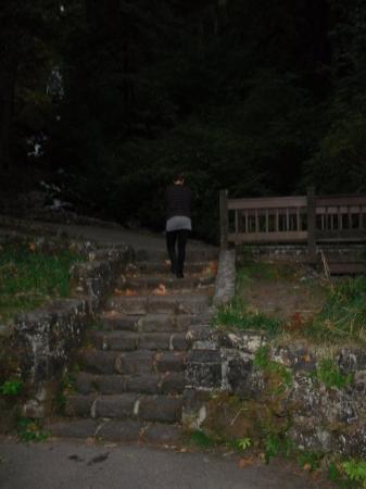 Portland, OR: Ligia @ Wahkeena Falls