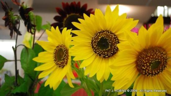 Sedalia, MO: Floriculture Building
