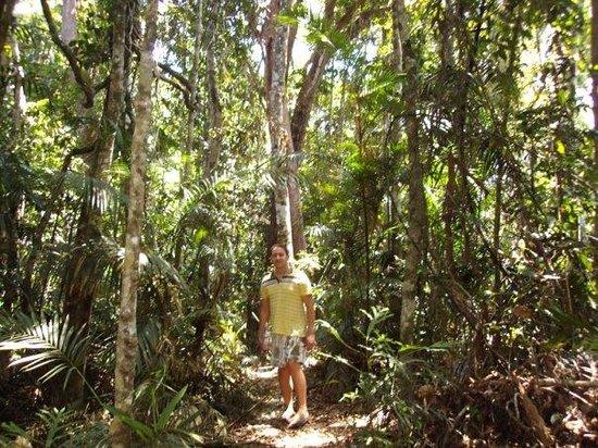Cairns, Australia: Rainforest