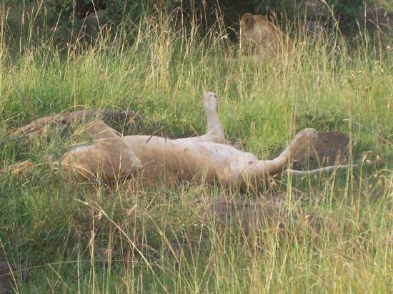 Bilde fra Masai Mara naturreservat
