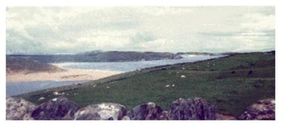 sheep on the North Sea, Wicke Scotland.