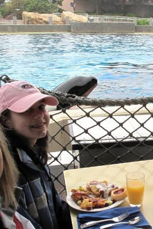 SeaWorld San Diego: Breakfast with Shamu at Seaworld, Sandiego, California