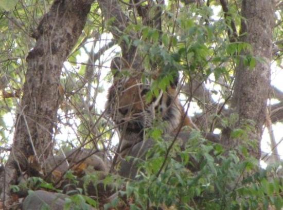 Bilde fra Jim Corbett National Park