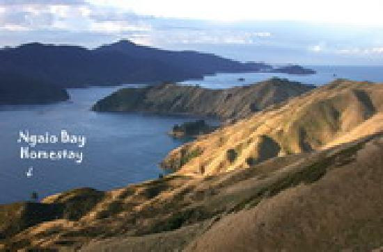 Ngaio Bay Ecostay B&B: French Pass, D'urville Island and Ngaio Bay