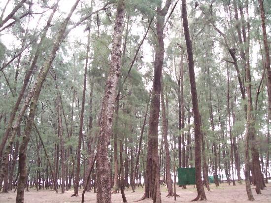 Jungle Lodges Devbagh Beach Resort: On the beach
