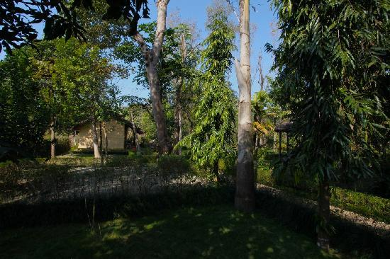Forest Hideaway Hotel & Cottages: A general view of the property