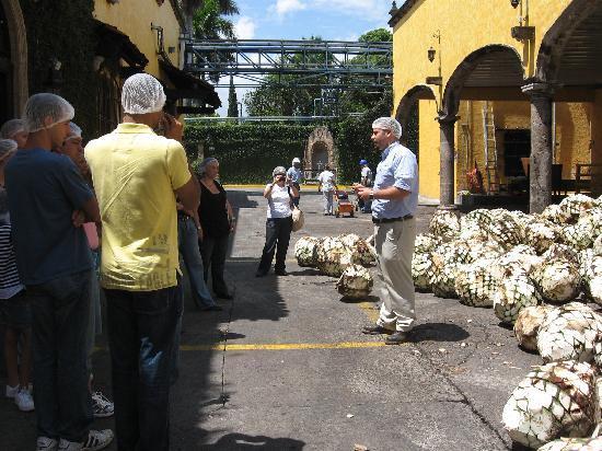 La Rojena: Preparing to enter the factory