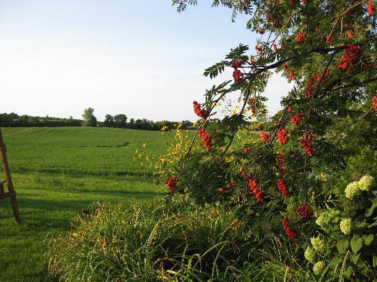Morgan Samuels Inn: Enchanting, Pastoral vista
