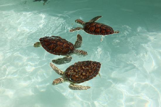 Xcaret Eco Theme Park: Turtles