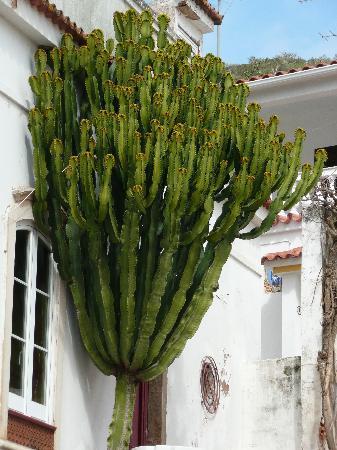 TUI BLUE Falesia: wicked cactus