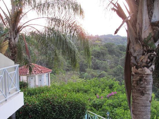La Mansion Inn: View of the jungle from our balcony