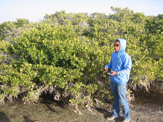Ecoturismo Kuyima S.P.R. de R.L.: guide Marco in the mangrove