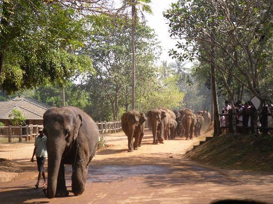 Club Palm Garden: at the elephant orphanage