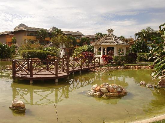 Iberostar Varadero: Jardines...