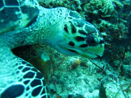 Del Mar Aquatics: Turtle