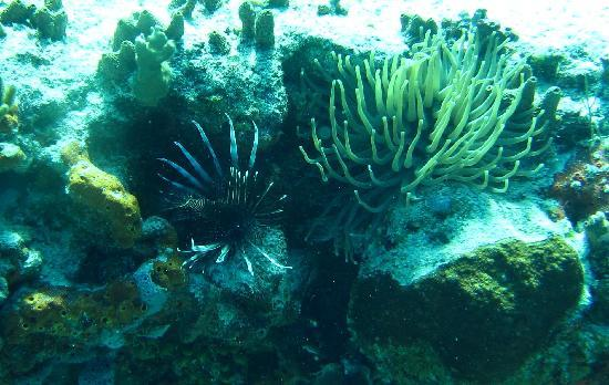 Del Mar Aquatics: Lionfish