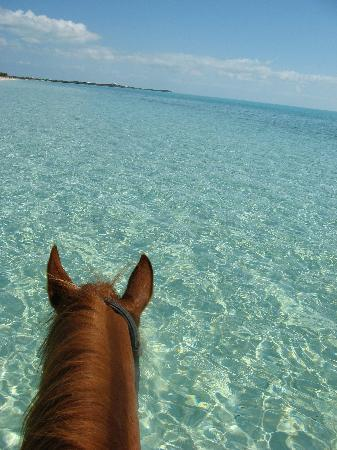 West Bay Club: me riding in the ocean provo ponies