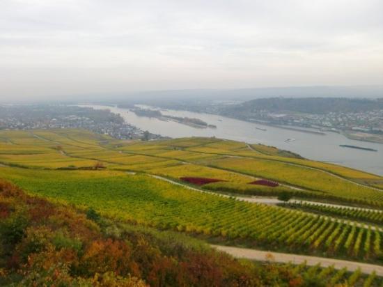 Ruedesheim am Rhein, Tyskland: 31.10.09 Rüdesheim