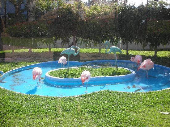 Hilton Waikoloa Village: Flamingos