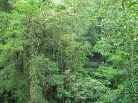 Gunung Mulu National Park, Sarawak, Borneo