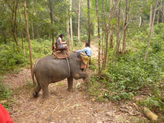 Koh Chang, Thailand: Elefantenreiten