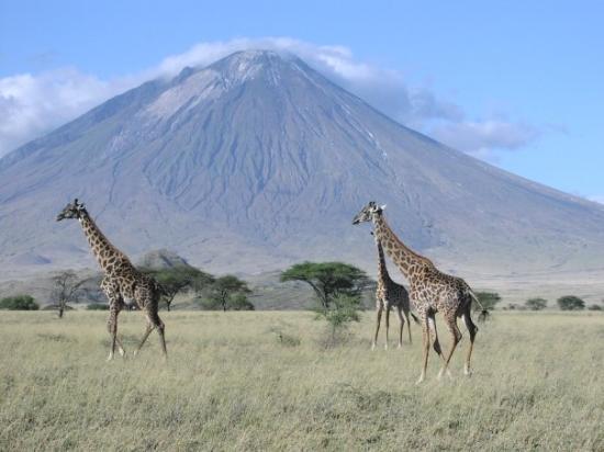 Serengeti National Park, Tanzania: serve un commento?
