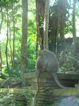Bilde fra Sacred Monkey Forest Sanctuary