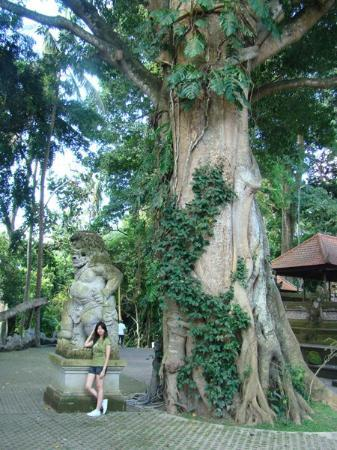 Sacred Monkey Forest Sanctuary: The tree must have live for hundred years. You just cannot NOT feel humble before nature force l