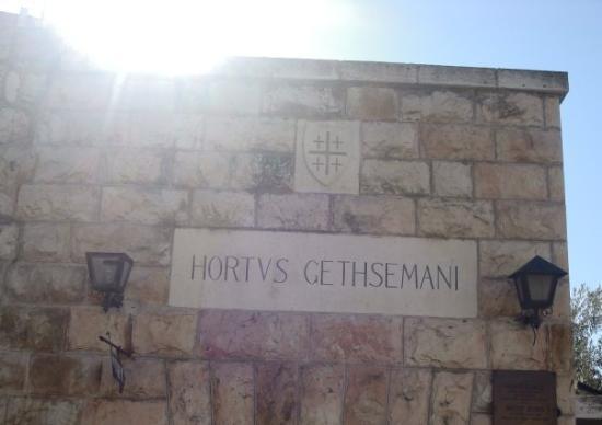 Garden of Gethsemane : Garden el gathsemani.