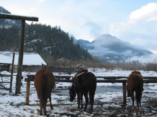 Horses in the snow. Whistler