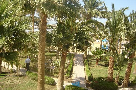 Royal Star Empire Beach Resort: Garden from hotel