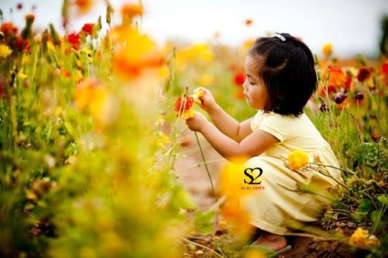 Bilde fra Carlsbad Flower Fields