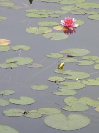 Bilde fra Suzhou