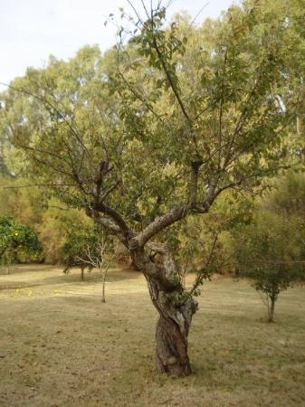 Chascomus, Argentina: Los frutales