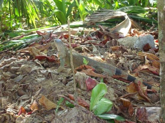 Bilde fra Cahuita