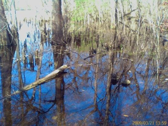 Pawleys Island, SC: Cypress knees...