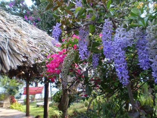 La Casa Rosa: The garden