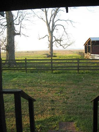 Loyd Hall Plantation: View from back door