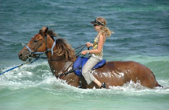 Horseback  Jamaica