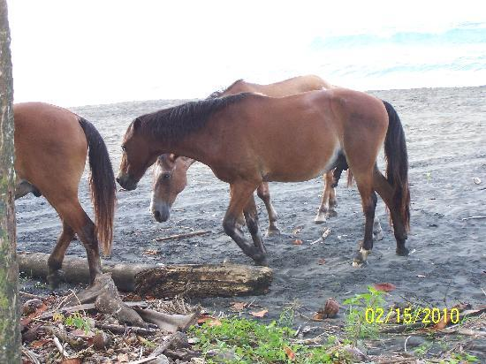 Magic Moon Beach House: The wild horses that roam the beaches right outside the bungalow.