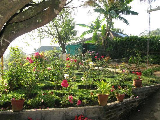 Rheinberg Homestay: Rose Garden