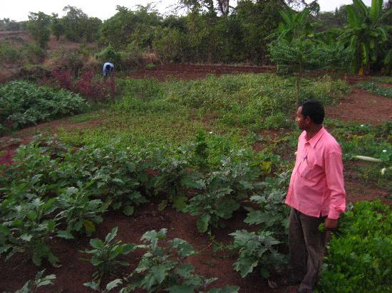 Mahua Bagh: Shyam ji and the veg patch - what you eat comes from here. Fresh green spinach and sometimes, bo