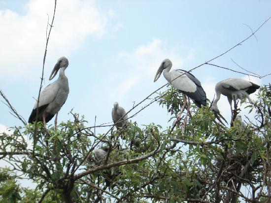 Ranganathittu Bird Sanctuary: Flamingos