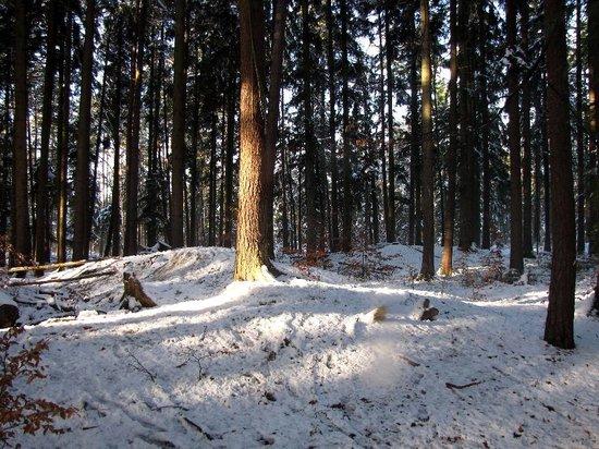 Ottenbronn, Németország: Blick auf einen altausgegrabenen Grabhügel