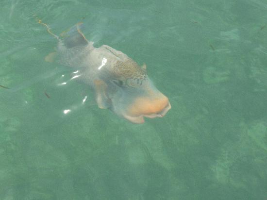 Kuredu Island Resort & Spa: Fish outside WV 536