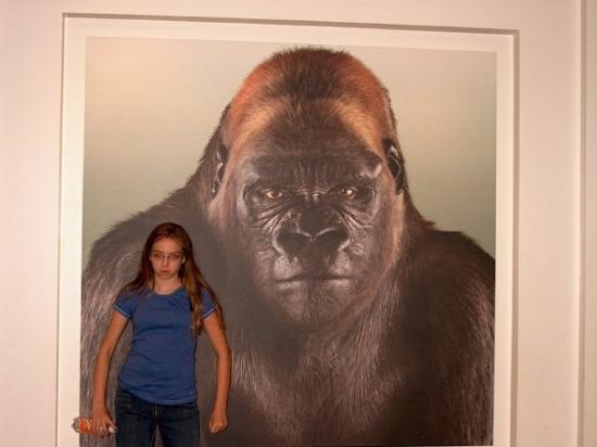 Museum for vitenskap og industri: Look! The Gorilla looks like Tazia =)