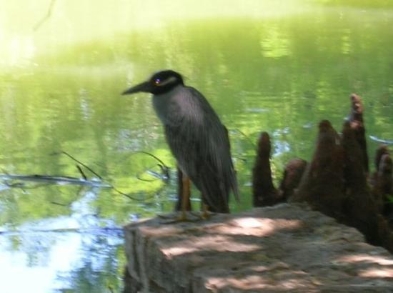 Bilde fra San Antonio Botanical Garden