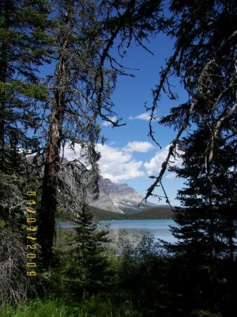 Kalispell, MT: Lake seen through the woods.